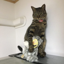 猫が猫のぬいぐるみを抱えています。