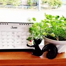 6月、今週2連休をいただきます。(6月9・10日)あとは週に1回水曜日のみです。